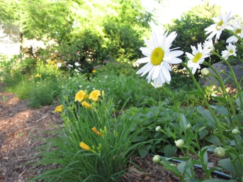Bloom Garden
